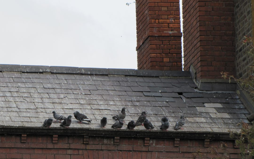 Dereliction – lessons from the birds